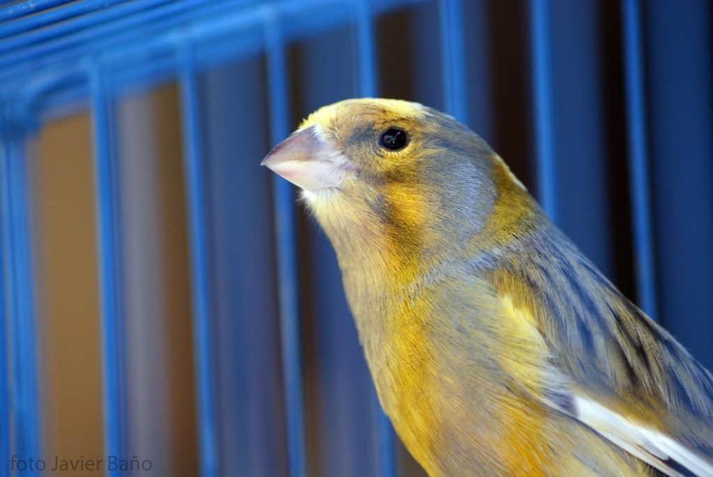 Tageslichtlampe für Vögel